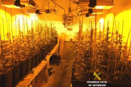 Detenida una pareja en Porreres por cultivar marihuana