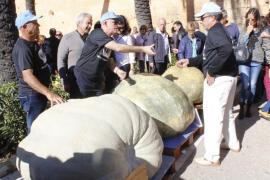Una calabaza gigante de 393 kilos en Muro