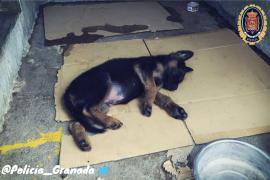 El precioso gesto de la Policía Local de Granada con un cachorro maltratado