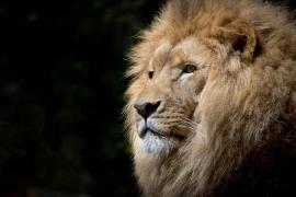 Una pareja utiliza un león para hacerse fotos eróticas