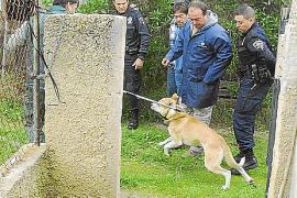 Dos perros peligrosos entran en casas de s'Arracó, matan animales y atemorizan a los vecinos