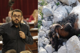 El conseller Vidal reconoce que no tuvieron «éxito» al combatir las cabras de Es Vedrà