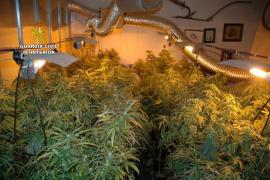 Detenido por cultivar marihuana en una casa 'okupa' de Cala Rajada