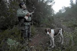 El tordo, la caza más preciada en Baleares