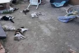 Denuncian la muerte a golpes de nueve gatos en un albergue de Alicante