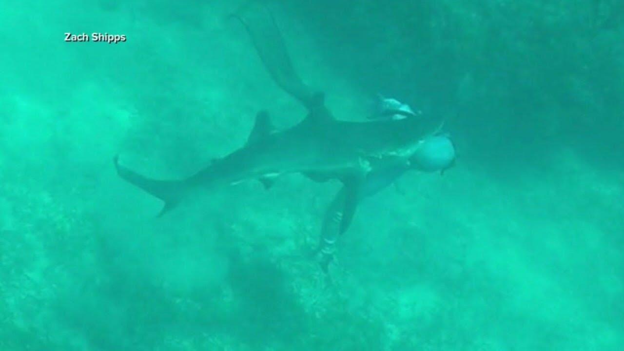 Un tiburón ataca a un hombre y este sobrevive para contarlo