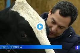 El candidato del PP en Andalucía le pide el voto a una vaca