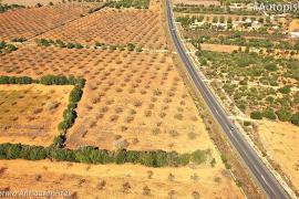 La Plataforma Antiautopista, «decepcionada» con el «engaño a la ciudadanía» sobre la carretera Llucmajor-Campos