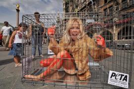 Animalistas proponen cambiar frases como «ser un conejillo de indias» por «ser un tubo de ensayo»
