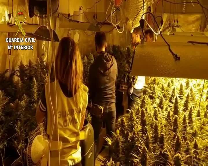 La Guardia Civil interviene 378 plantas de marihuana en una vivienda en Ibiza