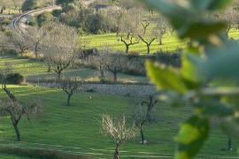 Vistas desde la ermita de Sineu