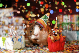 ¿Hay que regalar mascotas en Navidad?