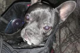Los Bomberos de Palma rescatan a un perro que se había caído a un pozo