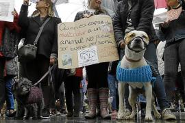 La asesoría legal contra el maltrato animal recibe varias denuncias al mes