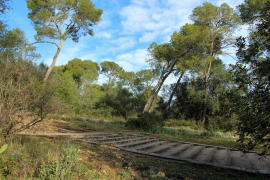 El Ayuntamiento de Palma reforesta el bosque de Bellver con 300 nuevas plantas