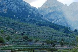 Nace la marca 'Serra de Tramuntana' para fomentar el turismo y los productos locales