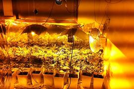 La Policía Local localiza una plantación de marihuana en el interior de un piso de Palma