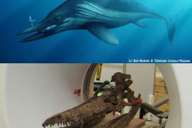 La ciencia 'revive' al reptil que nadó como un delfín hace 200 millones de años