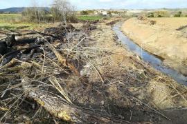 Terraferrida denucia que Medi Ambient está «destrozando» los bosques de ribera