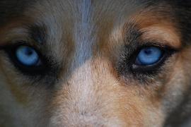 El perro, el mejor amigo del hombre desde hace más de 11.000 años