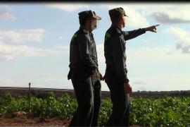 La Guardia Civil busca en una finca de Muro al hombre desaparecido que pudo ser asesinado