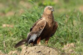 Medi Ambient prepara una estrategia sobre aves agrarias en plena polémica de las ZEPA