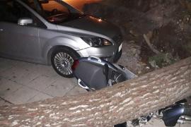 Árboles caídos y vehículos dañados por el fuerte viento en Mallorca