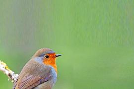 El invierno tranquilo en Ibiza de las aves migrantes