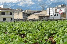 Los productores de patata se ponen en alerta ante la previsión de heladas y viento