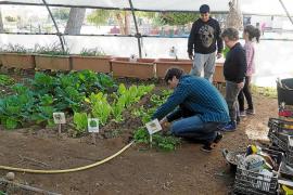El CEIP Puig d'en Valls gana un premio por su trayectoria en desarrollo sostenible