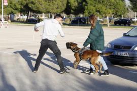 Llegan a Mallorca los primeros perros para proteger a mujeres maltratadas