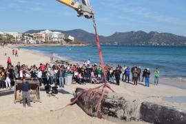 Retiran la ballena varada en Cala Millor