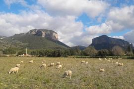 Tiempo estable y sin lluvias en Baleares tras el paso de 'Helena'