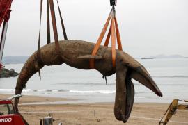 Retiran una ballena muerta de 16 metros en una playa de Bizkaia