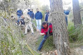 Sólo 20 personas escogen el pino de Ternelles que protagonizará Sant Antoni