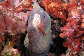 La bellesa de Balears també sota l'aigua... (Dragonera, a -47 metres)
