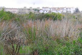 Alternativa rechaza que el Ullal deje de ser un humedal para ser urbanizado