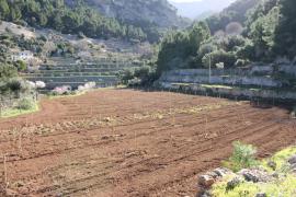 La finca de Planícia acogerá 28 variedades locales de cerezo