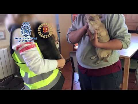 La Policía desmantela un criadero ilegal y rescata a doce perros