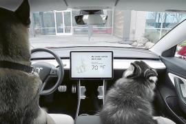 El Tesla, un coche con 'modo perro'