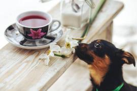 Abre la primera cafetería en la que se pueden adoptar perros