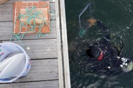 Identifican 269 especies de gusanos marinos en el puerto y la Bahía de Palma