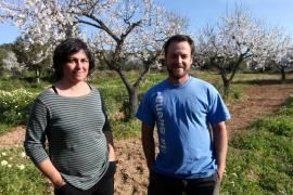La plantación de almendros en Cas Secorrat, en imágenes (Fotos: Daniel Espinosa).