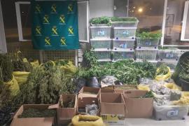 La Guardia Civil desmantela un laboratorio con más de 3.600 plantas de marihuana en Ibiza