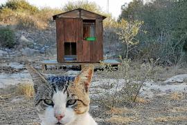 Animalistas denuncian envenenamiento y muerte masiva de gatos en Formentera