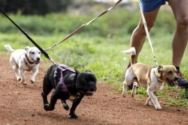 Tengo más de tres mascotas, ¿cómo me afecta la nueva ordenanza?