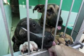 Actúa teme que la nueva ordenanza provoque un «abandono masivo» de mascotas