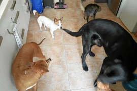 Rechazo frontal de los animalistas al límite de mascotas en Palma