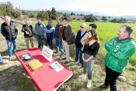 Un proyecto piloto busca recuperar una variedad milenaria de trigo de Ibiza