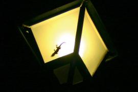 Vigilante de noche